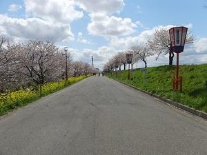 15さくら公園.jpg
