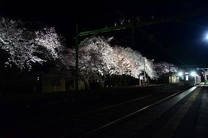 20210405夜桜 (2).jpg