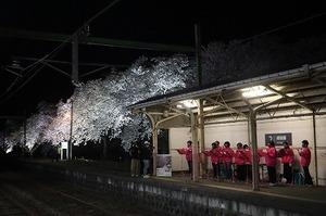 夜桜Shu*Kura (7).jpg